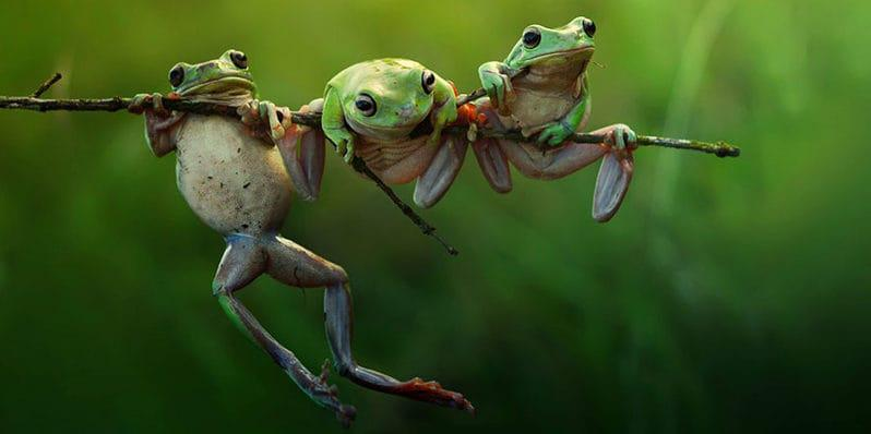three-frogs