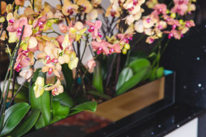flowers-yellow-pink-orchid_Easy-Resize.com