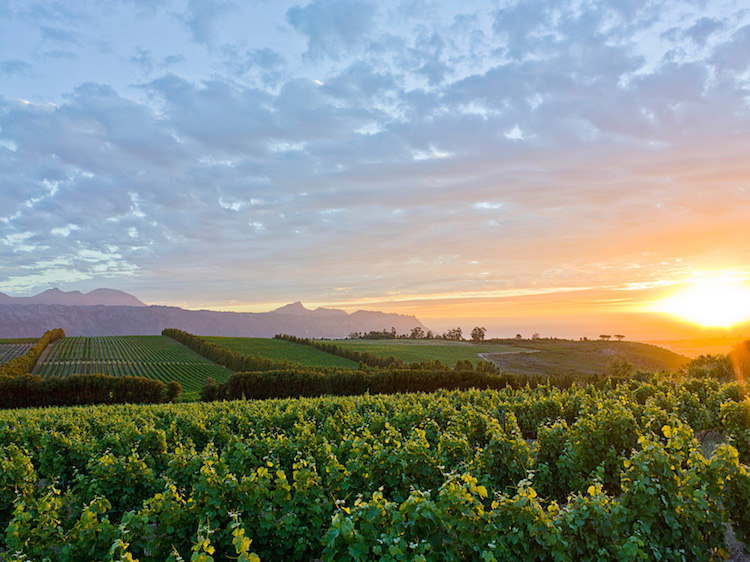 Waterkloof Wine Estate