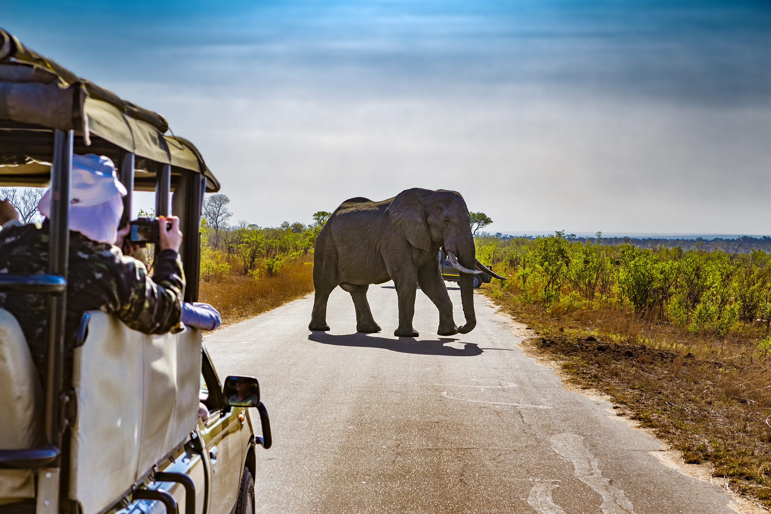Safari in South Africa - elephant in the road