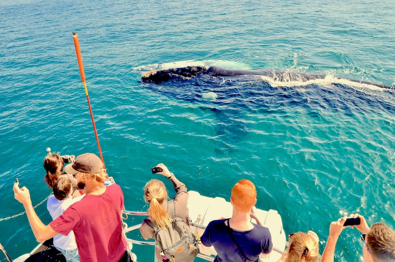 Whale watching charter in Hermanus